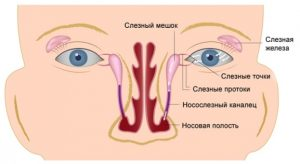 Схема слезного канала